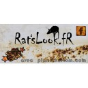 Sticker ratslook.fr facebook jaune rust is not a crime rats look fr 3